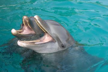 Palma Sola Bay Sightseeing Dolphin...