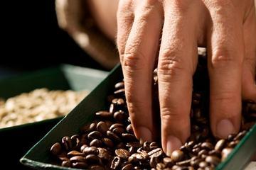 Excursão sobre o Café Britt e Degustação de Chocolate saindo de San...