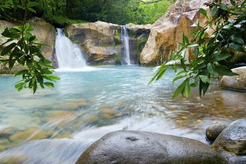 Kombi-Tour zum Buena Vista Regenwald