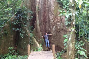 Reserva Florestal Cinco Ceibas e Parque de Aventura saindo de San Jose