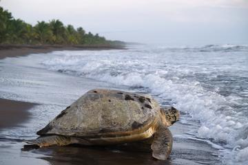 Tortuguero National Park