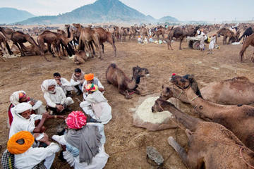 13-Day Pushkar Photo Expedition from Delhi