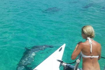 Book Shipwreck Snorkel and Wild Dolphin Encounter on Viator