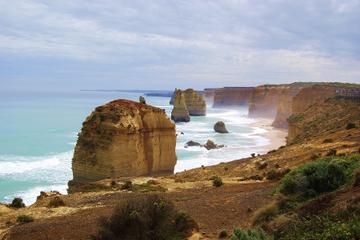 Escursione ecologica di un giorno in piccoli gruppi sulla Great Ocean