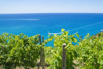 Barcelona Sailing Tour with Mediterranean Winery
