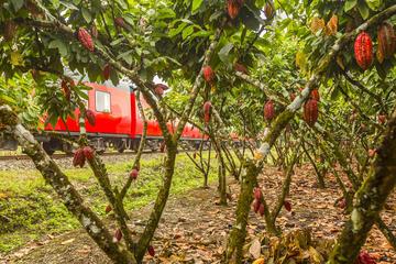 Full-Day Historic Hacienda Chocolate...