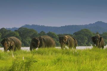 2 Nights 3 Days Jungle Safari Tours in Chitwan Nepal