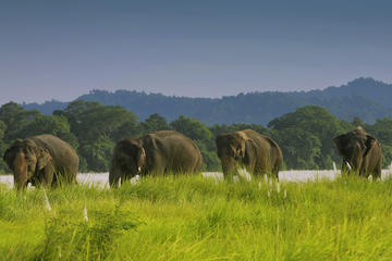 Full Day Jungle Safari Tours in Chitwan National Park Nepal