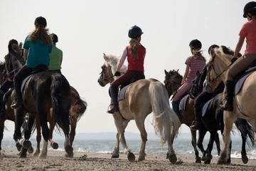 Tour à cheval au départ de Cancun