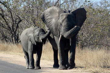 Kruger National Park - 1 Day (Open...