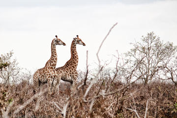 Kruger National Park - 2 Days (Open ...