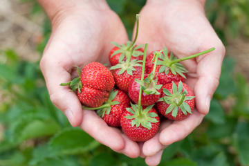 6-Hour Private Tour: Strawberry Picking and Water Town Visiting from...