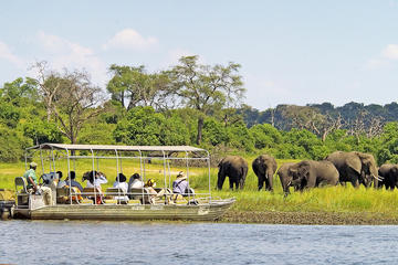Full-Day Chobe National Park Tour from Victoria Falls