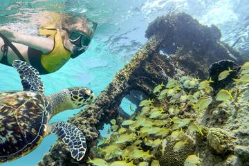 Excursión de buceo de superficie por arrecifes y restos de naufragios...