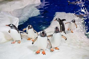 24hr Hop-On Hop-Off inc Kelly Tarlton's SeaLife Aquarium & Sky Tower