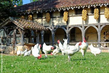 Excursion privée: Lyon gourmet avec dégustation de vin
