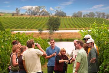 Excursão por vinhedos e vinícolas do...