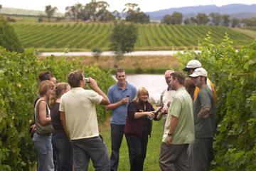 Smak på viner og besøk vingårder rundt om i Yarra Valley på en...