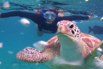Buceo de superficie en el arrecife con tortugas de Akumal y cenote...