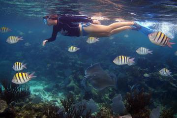 Excursión de buceo de superficie en Playa del Carmen