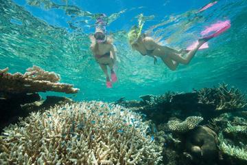 Duik- en snorkelcruise naar het Great Barrier Reef vanuit Cairns