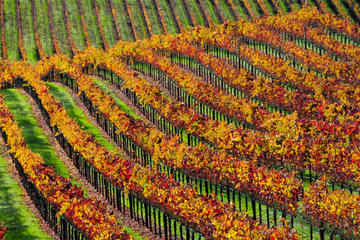 Sonoma Redwoods and Wine Small-Group...