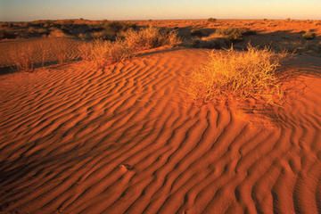 11-Day Simpson Desert 4WD Expedition from Adelaide to Alice Springs