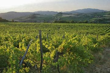 Tuscany Countryside - Val d'Orcia Area: Private Full-Day Tour from Rome
