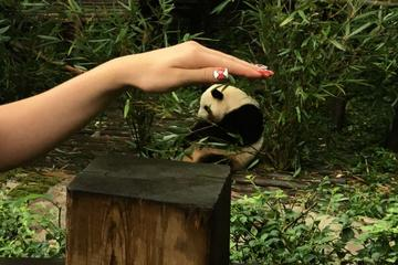 Chengdu Private Day of City Highlights and Panda Experience