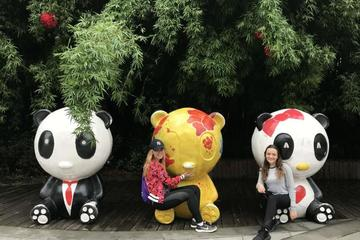Morning Trip of Giant Panda Base in Chengdu