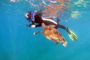 Snorkeling with Turtles in Tenerife
