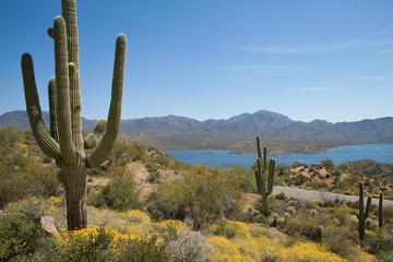 Aventure dans le désert de Sonora au départ de Phoenix