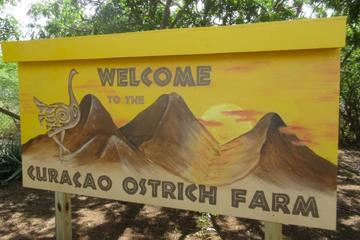 Curacao Eastern safari tour