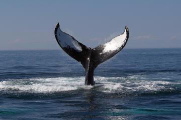 Crociera di avvistamento delle balene da Boston