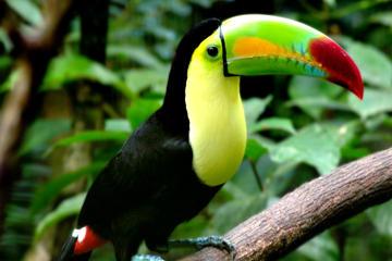 Belize Zoo Tour from San Ignacio