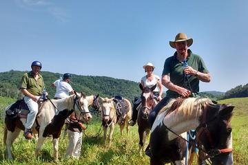 Horseback Riding on an Equestrian Farm in San Ignacio
