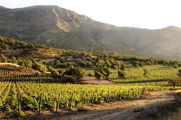 Small-Group Maipo Vineyards Full-Day Experience