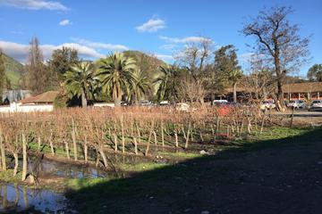 Visita de medio día al viñedo de Santa Rita para grupos pequeños