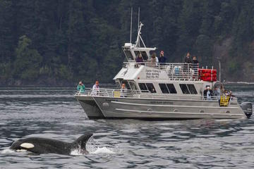 Day Trip Orcas Island Whale Watching near Eastsound, Washington