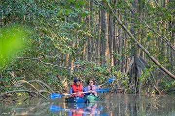 Mangrove Kayak Exploration Tour from Puerto Jimenez