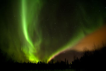 Evening Reindeer Safari in the Arctic