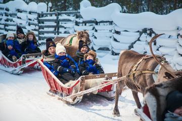 Lapland Along the Reindeer Path: 1-Hour Reindeer Safari from Rovaniemi