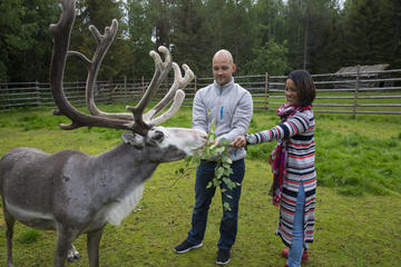 Half-Day Tour of Rovaniemi Animal