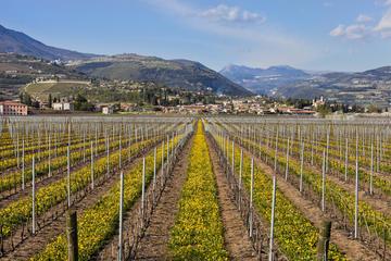 Dagstur til Valpolicella fra Venezia: Vinsmaking og Verona