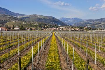 Excursión de un día a Valpolicella desde Venecia: cata de vinos y...