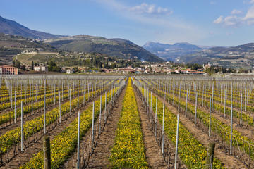 Valpolicella Day Trip from Venice