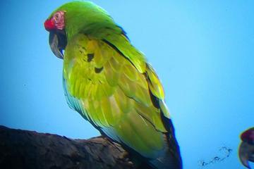 Macaws Watching and Botanical Garden Tour