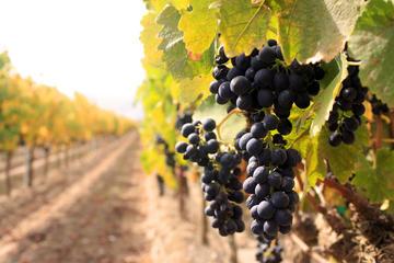 Half-Day Niagara Wine Tour and Tastings