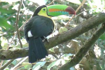 Private Monteverde Cloud Forest Walk