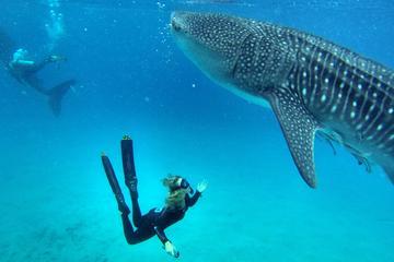 2-Day Freediving Course in Cebu